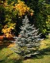 Autumn colors symbiosis Stock Images