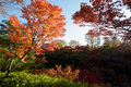 Autumn colors in tofukuji temple, Kyoto Royalty Free Stock Photo