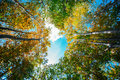 Autumn colors tree crowns with beautiful over blue sky Stock Photography