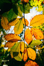 Autumn colors tree leaves with orange and yellow Stock Images