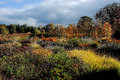 Autumn colours in formal garden Royalty Free Stock Photo