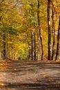 Autumn colours in Niagara
