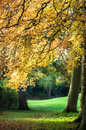 Autumn colours sunlight through leaves creating a golden glow to a late afternoon walk Royalty Free Stock Photos