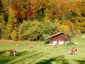 Autumn colours in Switzerland Royalty Free Stock Photo