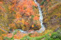Autumn colours of valley jougakura aomori japan Stock Photo