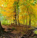 Autumn comes to a forested area in Central Park, NYC Royalty Free Stock Photo