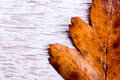 Autumn composition. Brown leaf on white wooden background. Royalty Free Stock Photo