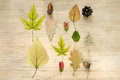 Autumn composition. Pattern of acorns, dried flowers, autumn leaves, seeds, wildflowers on a wooden background. Flat lay