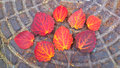 Autumn composition of red-orange leaves Royalty Free Stock Photo