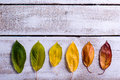 Autumn composition. Various colorful leaves. Studio shot, wooden Royalty Free Stock Photo