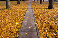 Autumn concrete track in park Stock Photography