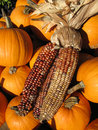 Autumn Corn With Pumpkins Royalty Free Stock Photo