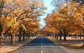 Autumn country road Royalty Free Stock Photo