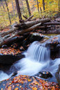 Autumn creek closeup in forest Royalty Free Stock Photo