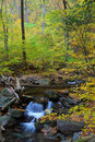 Autumn creek in forest Stock Images