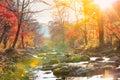 Autumn creek woods with yellow trees foliage Royalty Free Stock Photo