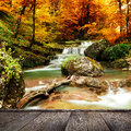 Autumn creek woods with yellow trees Royalty Free Stock Photo