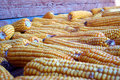Autumn crop - corn Stock Photo