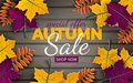 Autumn 3d sale banner, paper frame, colorful tree leaves on wooden background. Autumnal design for fall season card, sale banner Royalty Free Stock Photo