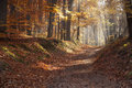 Autumn dawn in forest. Morning sun beams or rays in autumn park or forest Royalty Free Stock Photo