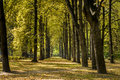 Autumn day in park saski in warsaw poland with shadows from the trees Royalty Free Stock Photography