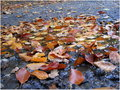 Autumn leaves rain Royalty Free Stock Photo