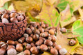 Autumn detail hazelnuts spilled from ceramic pot on background leaves Royalty Free Stock Photos