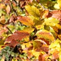 Autumn details of leaves in the forest Royalty Free Stock Photography