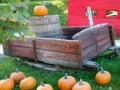 Autumn Display Royalty Free Stock Photo