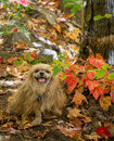Autumn dog Images libres de droits