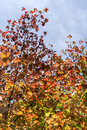 Autumn dressed trees stock photo Royalty Free Stock Photography