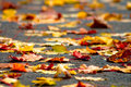 Autumn dry leaves Royalty Free Stock Photos