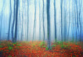 Autumn fairytale forest colorful mysterious landscape Royalty Free Stock Photo
