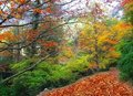 Autumn fall beech forest track yellow leaves Stock Photos