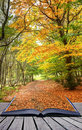 Autumn Fall forest landscape magic book pages Royalty Free Stock Photography