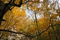 Autumn fall forest Royalty Free Stock Photo