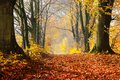 Autumn, fall forest. Path of red leaves towards light. Royalty Free Stock Photo