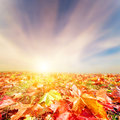 Autumn fall landscape colorful leaves sunset sunny sky perfect for background Royalty Free Stock Image
