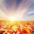 Autumn, fall landscape. Colorful leaves