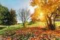 Autumn, fall landscape in park Royalty Free Stock Photo