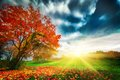 Autumn fall landscape in park colorful leaves sunny blue sky at sunset Royalty Free Stock Photos