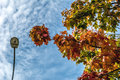 Autumn, fall landscape. Tree with colorful leaves. Royalty Free Stock Photo