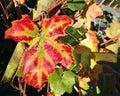 Autumn Or Fall Leaf. Orange Co...