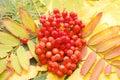 Autumn fall leaves Стоковое Изображение RF