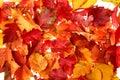 Podzim pokles listy