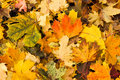Autumn fall leaves Royalty Free Stock Photo
