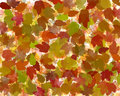 Autumn or fall leaves abstract Stock Photos