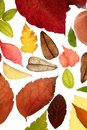 Autumn, fall leaves decorative Stock Photography
