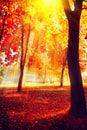 Autumn. Fall nature scene. Autumnal park Royalty Free Stock Photo
