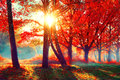 Autumn. Fall nature scene. Autumnal park Royalty Free Stock Photo